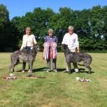 KCM Deerhound Club